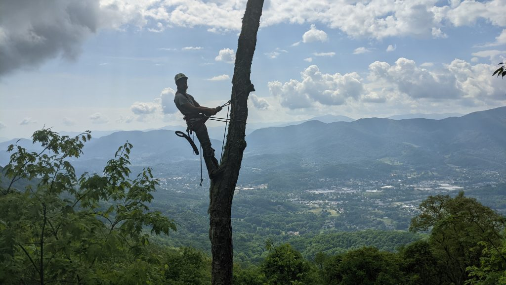 Preston In a tree with a view